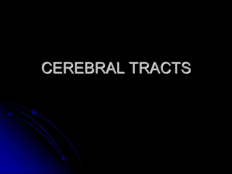 CEREBRAL TRACTS