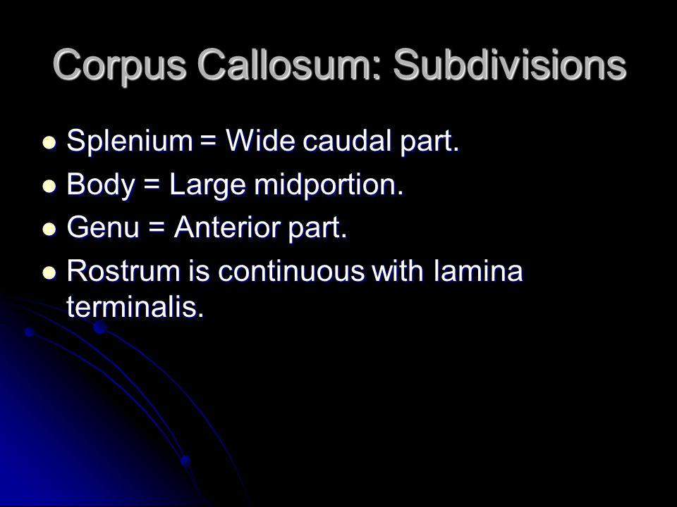 Corpus Callosum: Subdivisions