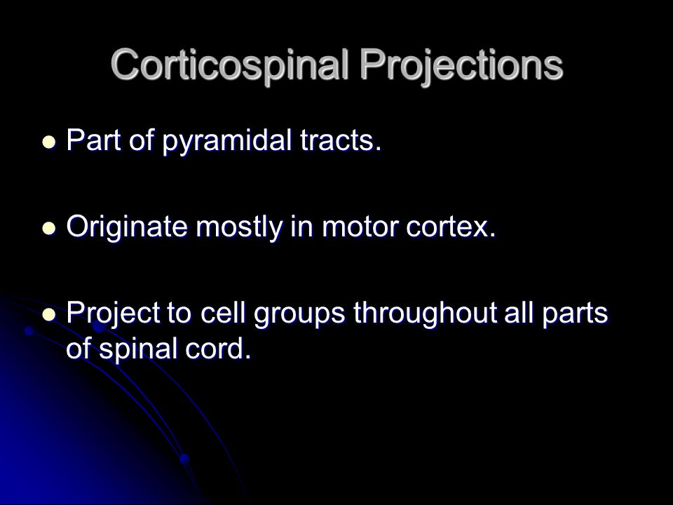 Corticospinal Projections