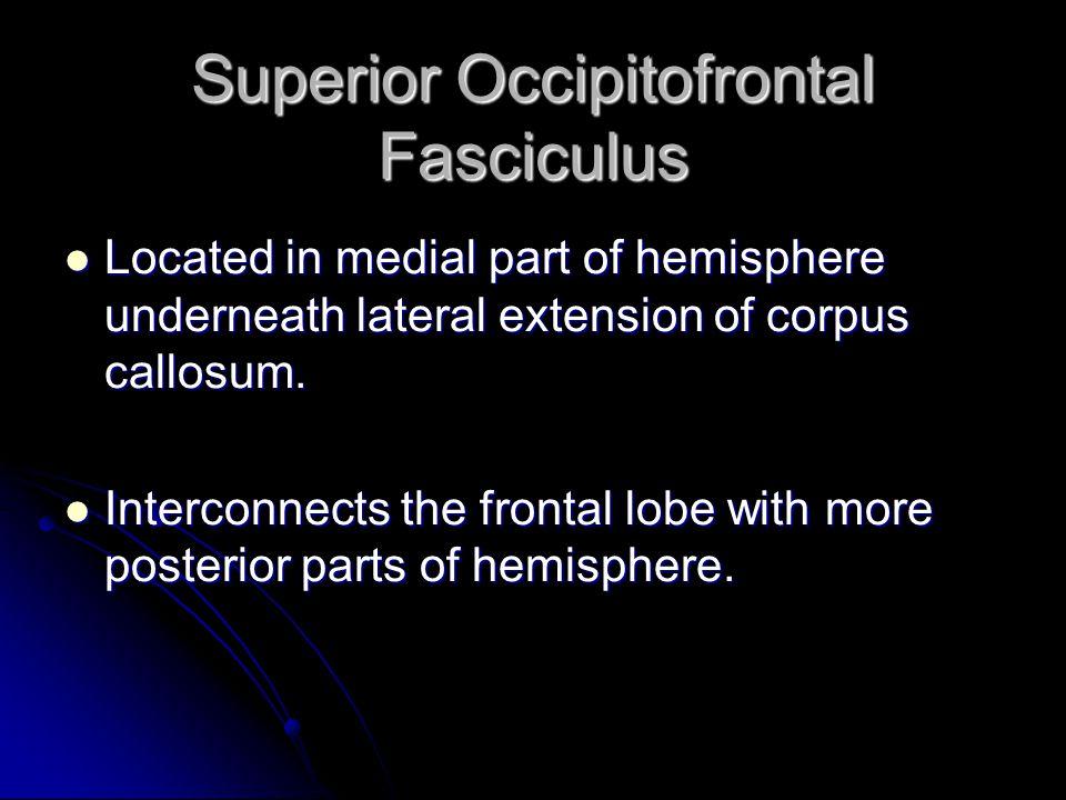 Superior Occipitofrontal Fasciculus