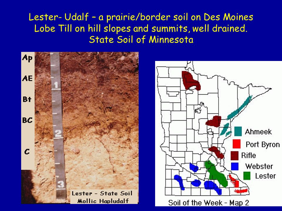 Lester- Udalf – a prairie/border soil on Des Moines Lobe Till on hill slopes and summits, well drained.