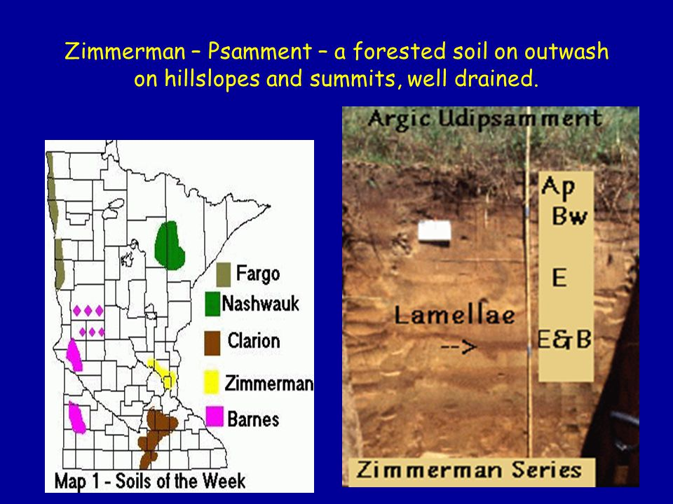 Zimmerman – Psamment – a forested soil on outwash on hillslopes and summits, well drained.
