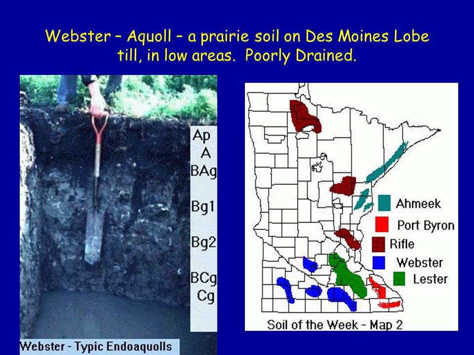 Webster – Aquoll – a prairie soil on Des Moines Lobe till, in low areas. Poorly Drained.