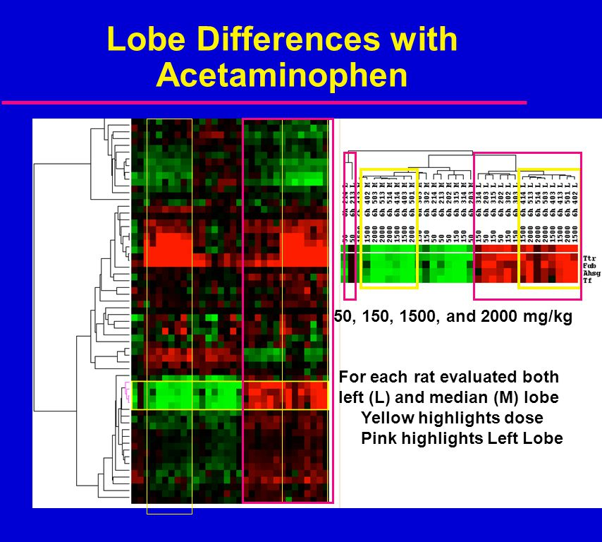 Lobe Differences with Acetaminophen