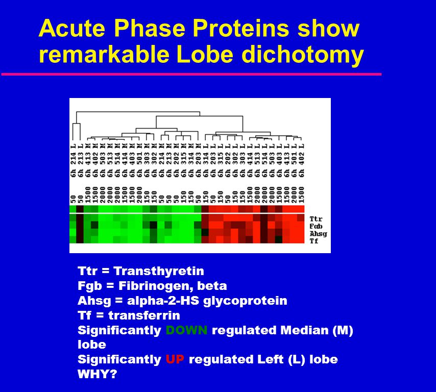 Acute Phase Proteins show remarkable Lobe dichotomy