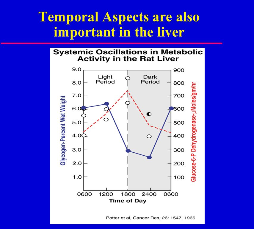 Temporal Aspects are also important in the liver