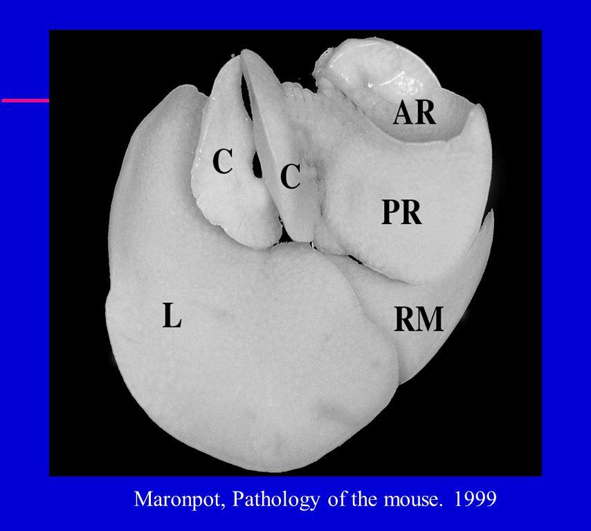 Maronpot, Pathology of the mouse. 1999