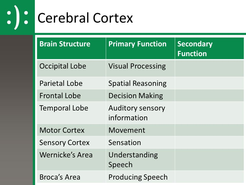 Cerebral Cortex Brain Structure Primary Function Secondary Function