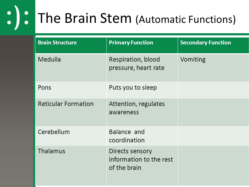 The Brain Stem (Automatic Functions)