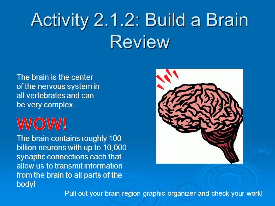 Activity 2.1.2: Build a Brain Review