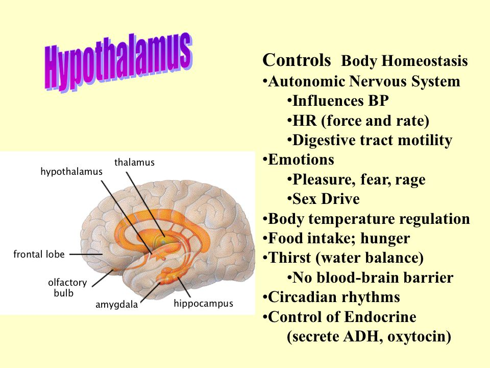 Hypothalamus Controls Body Homeostasis Autonomic Nervous System