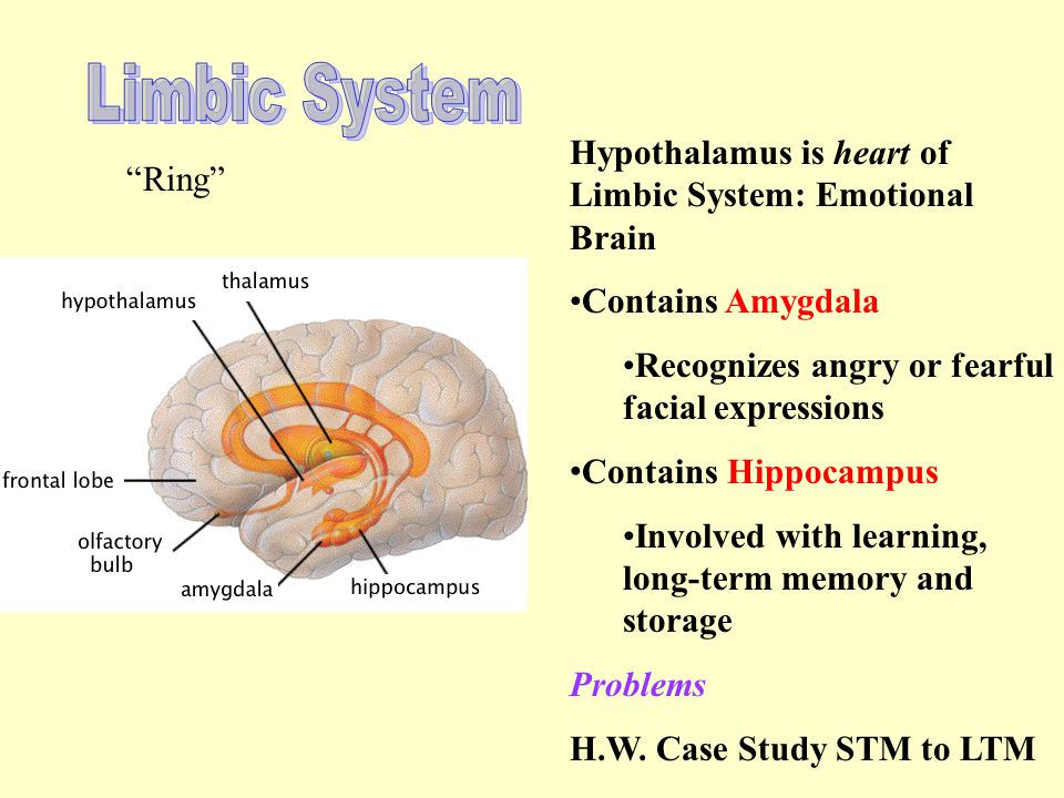 Limbic System Hypothalamus is heart of Limbic System: Emotional Brain
