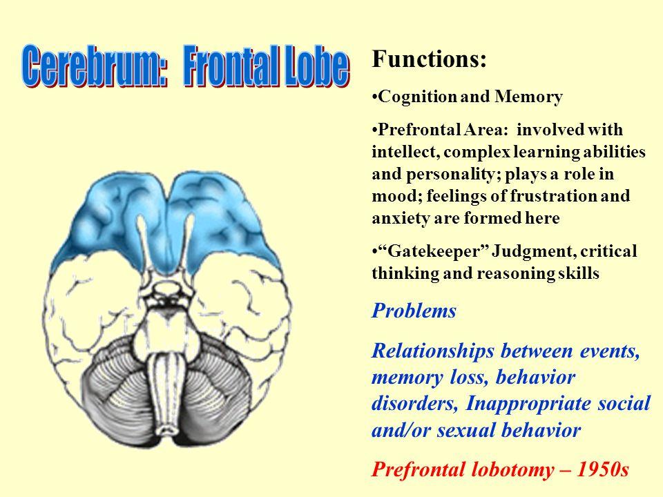 Cerebrum: Frontal Lobe