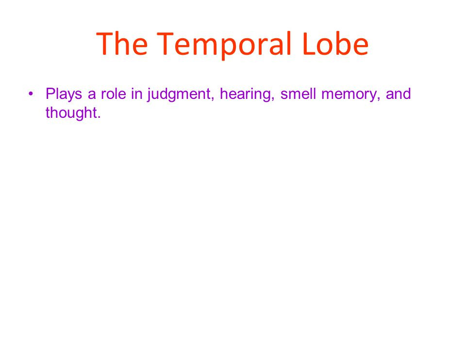 The Temporal Lobe Plays a role in judgment, hearing, smell memory, and thought.