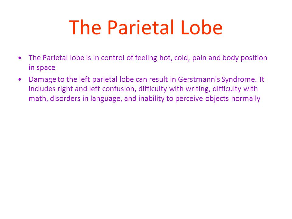 The Parietal Lobe The Parietal lobe is in control of feeling hot, cold, pain and body position in space.