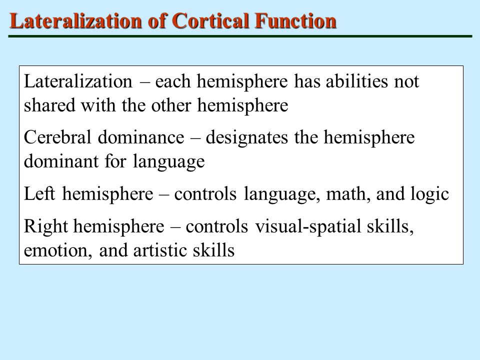 checkpoint cerebral lateralization function Have to do with brain lateralization (and who cares) what is brain lateralization the human brain is a paired organ it is composed of two halves (called cerebral hemispheres) that look pretty much alike.