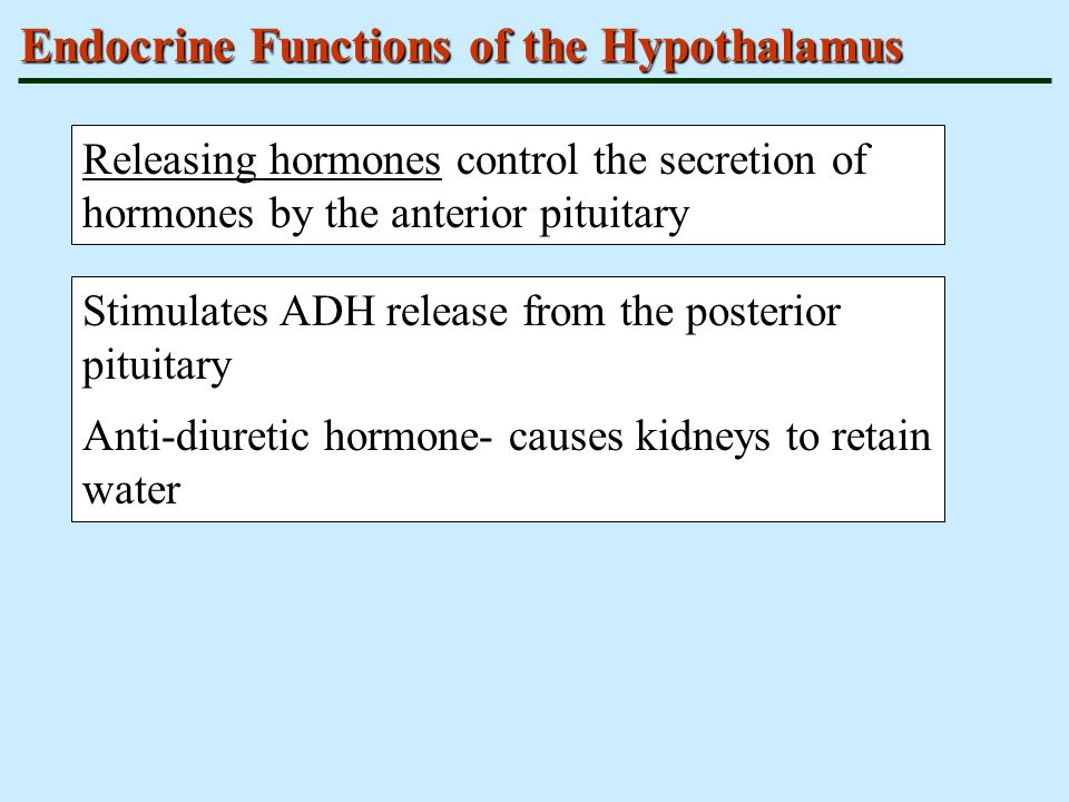 Endocrine Functions of the Hypothalamus