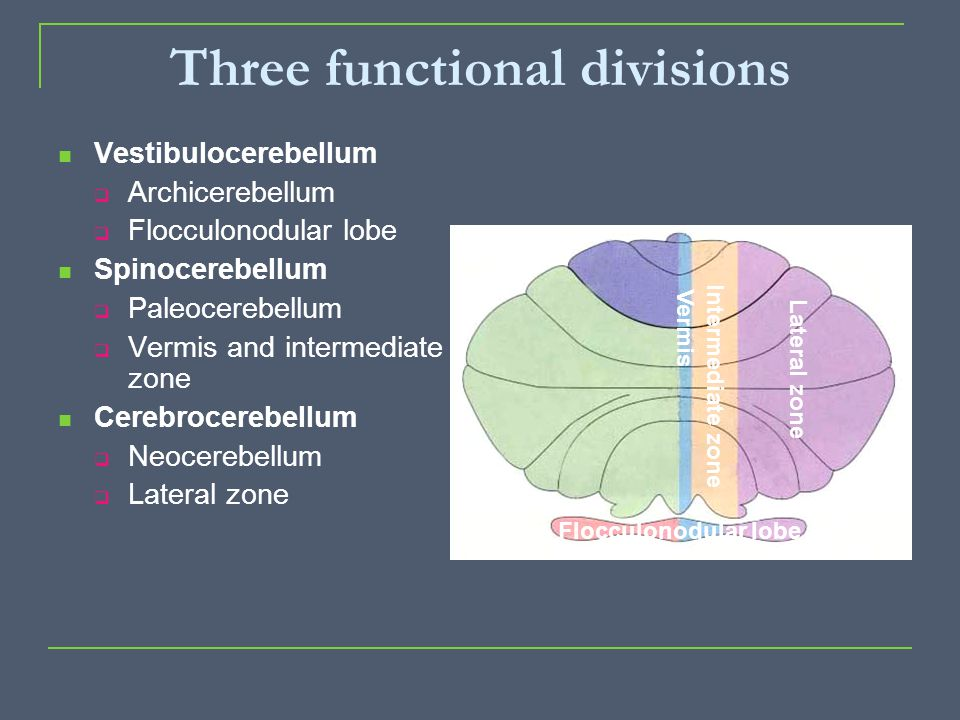 Three functional divisions
