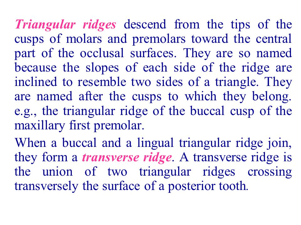 Triangular ridges descend from the tips of the cusps of molars and premolars toward the central part of the occlusal surfaces. They are so named because the slopes of each side of the ridge are inclined to resemble two sides of a triangle. They are named after the cusps to which they belong. e.g., the triangular ridge of the buccal cusp of the maxillary first premolar.