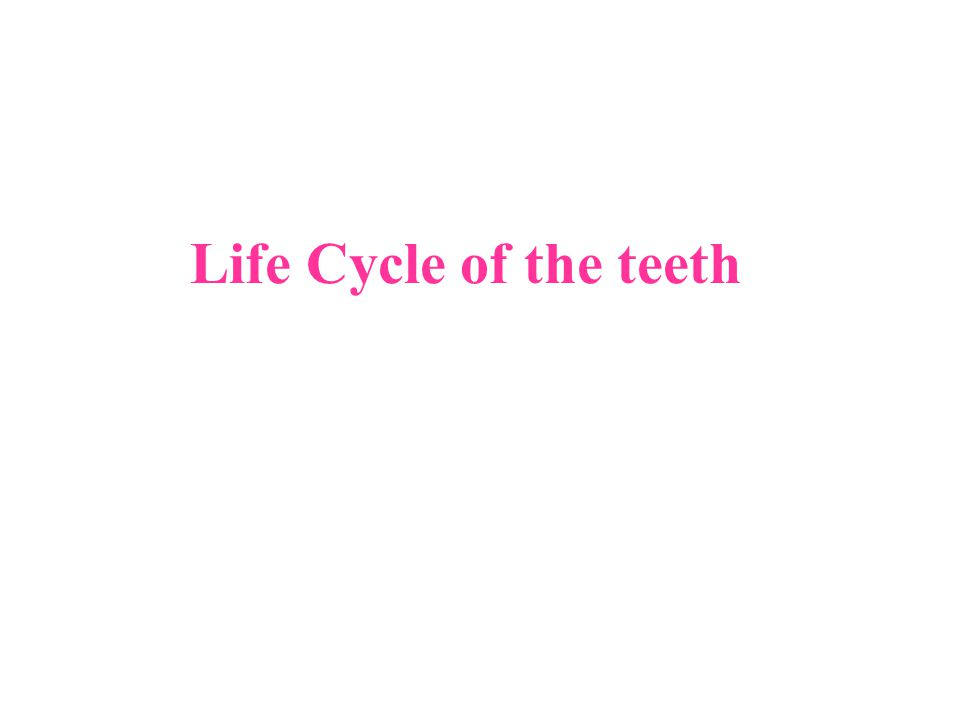 Life Cycle of the teeth