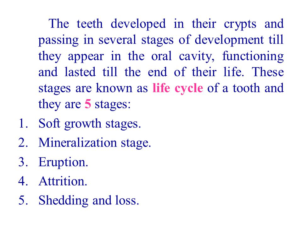 The teeth developed in their crypts and passing in several stages of development till they appear in the oral cavity, functioning and lasted till the end of their life. These stages are known as life cycle of a tooth and they are 5 stages:
