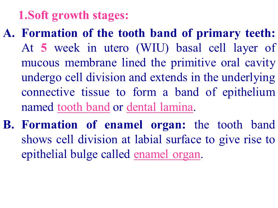 1.Soft growth stages: