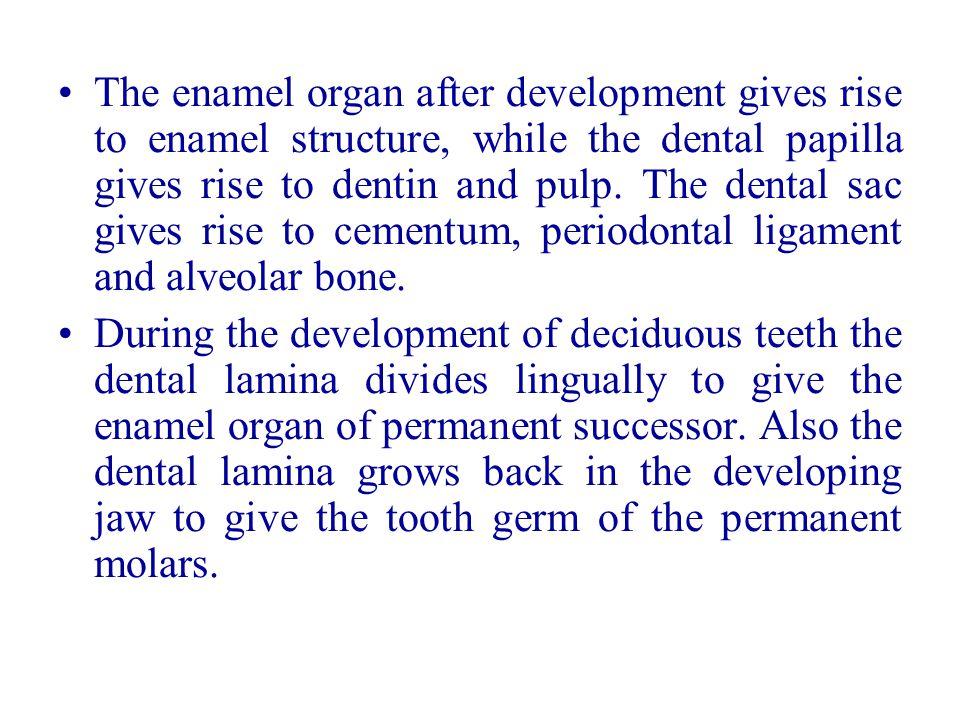 The enamel organ after development gives rise to enamel structure, while the dental papilla gives rise to dentin and pulp. The dental sac gives rise to cementum, periodontal ligament and alveolar bone.