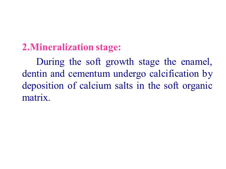 2.Mineralization stage: