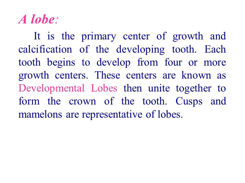 A lobe: