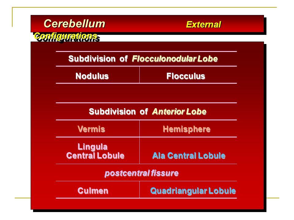Cerebellum External Configurations