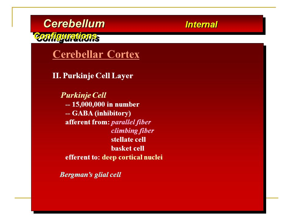 Cerebellum Internal Configurations