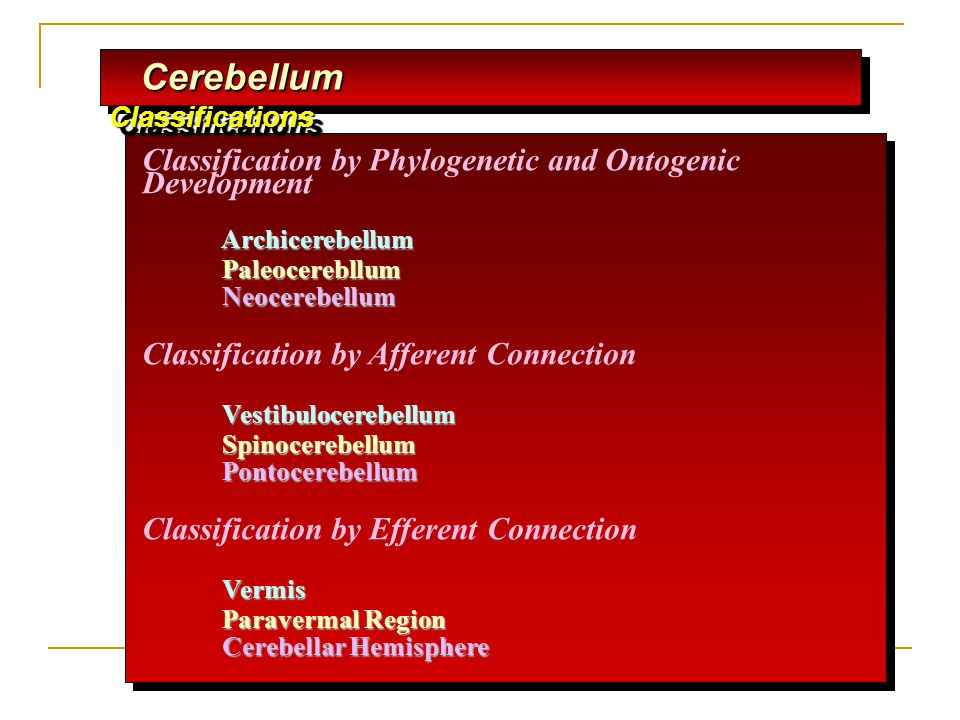 Cerebellum Classifications
