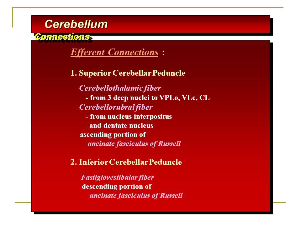 Cerebellum Connections