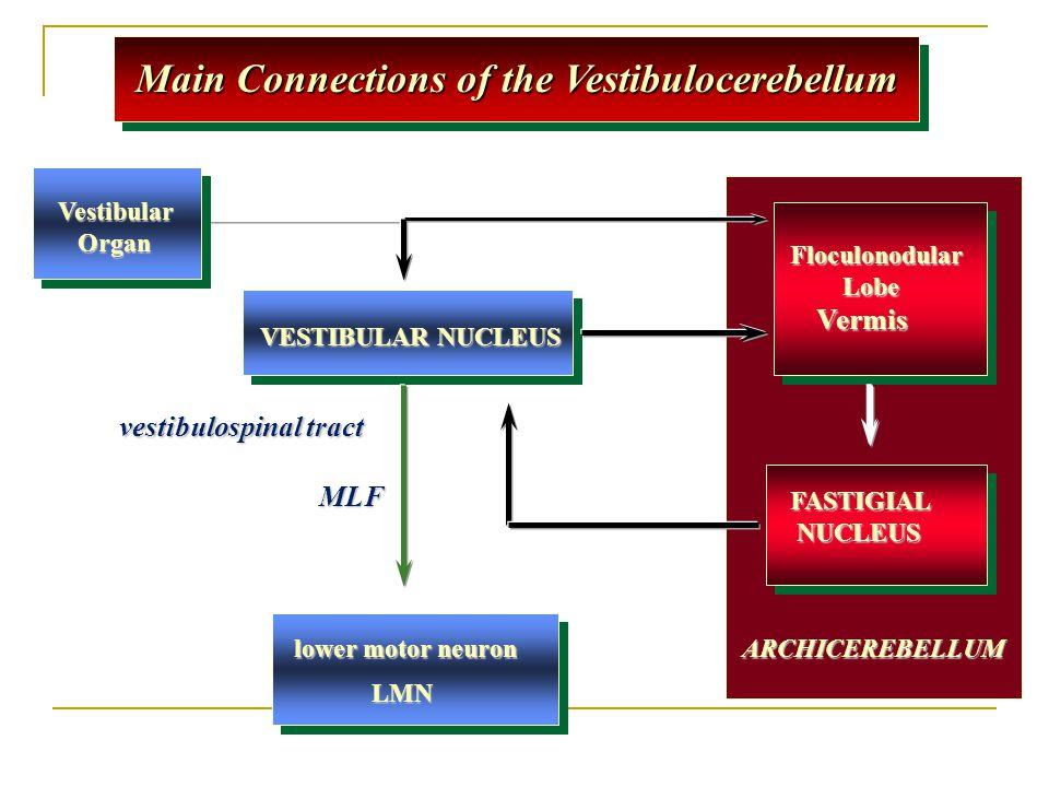 Main Connections of the Vestibulocerebellum