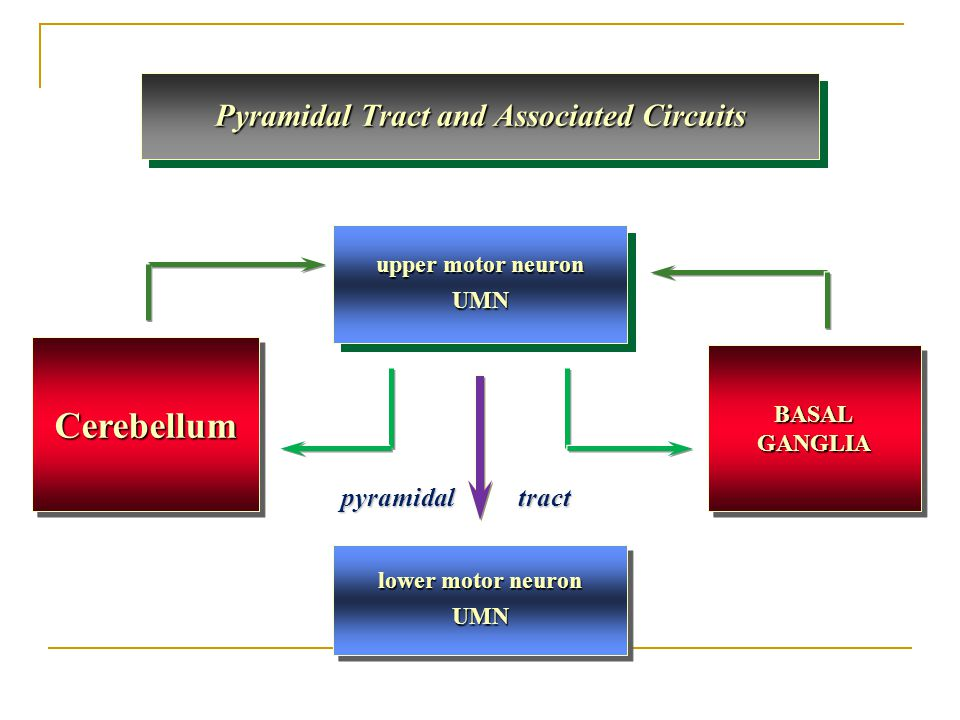 Pyramidal Tract and Associated Circuits
