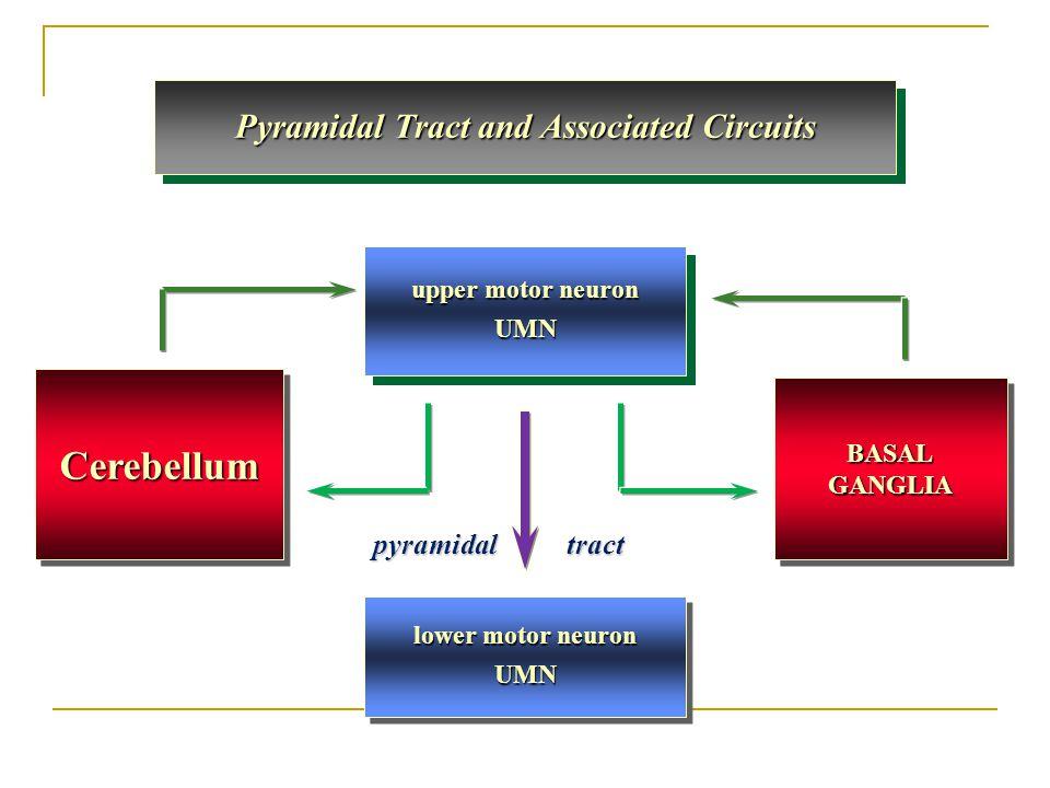 Pyramidal Tract and Associated Circuits