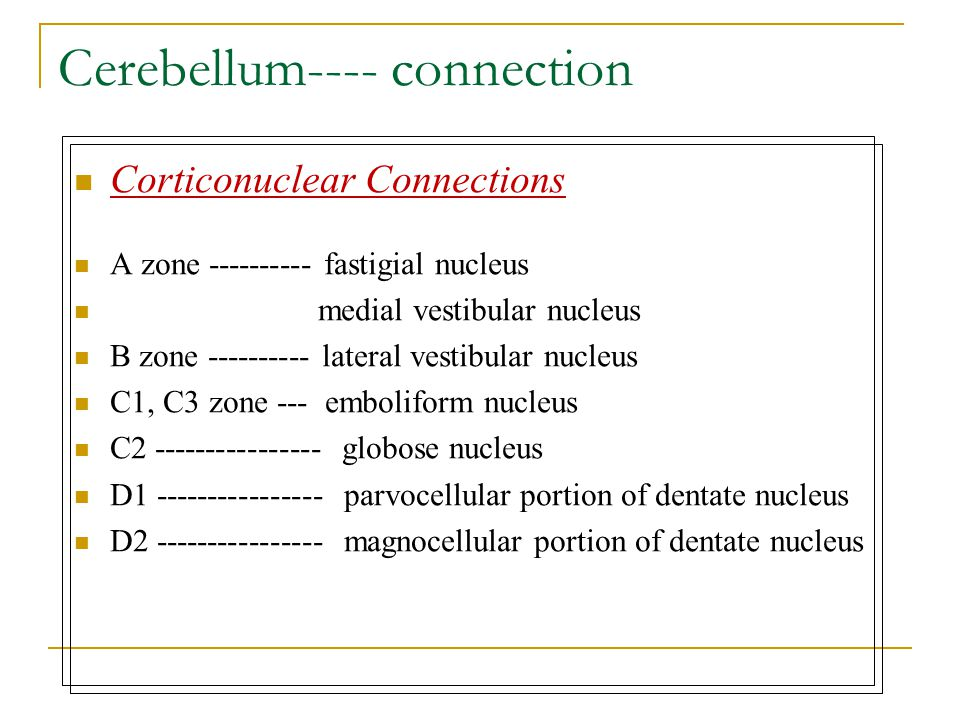 Cerebellum---- connection