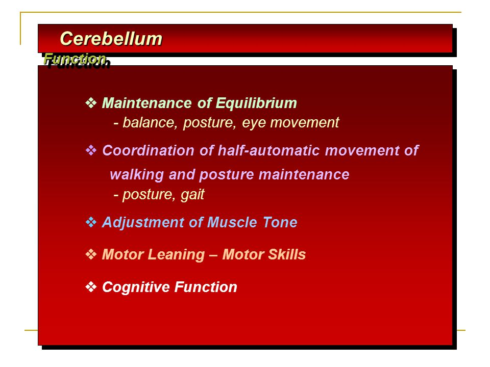 Cerebellum Function  Maintenance of Equilibrium