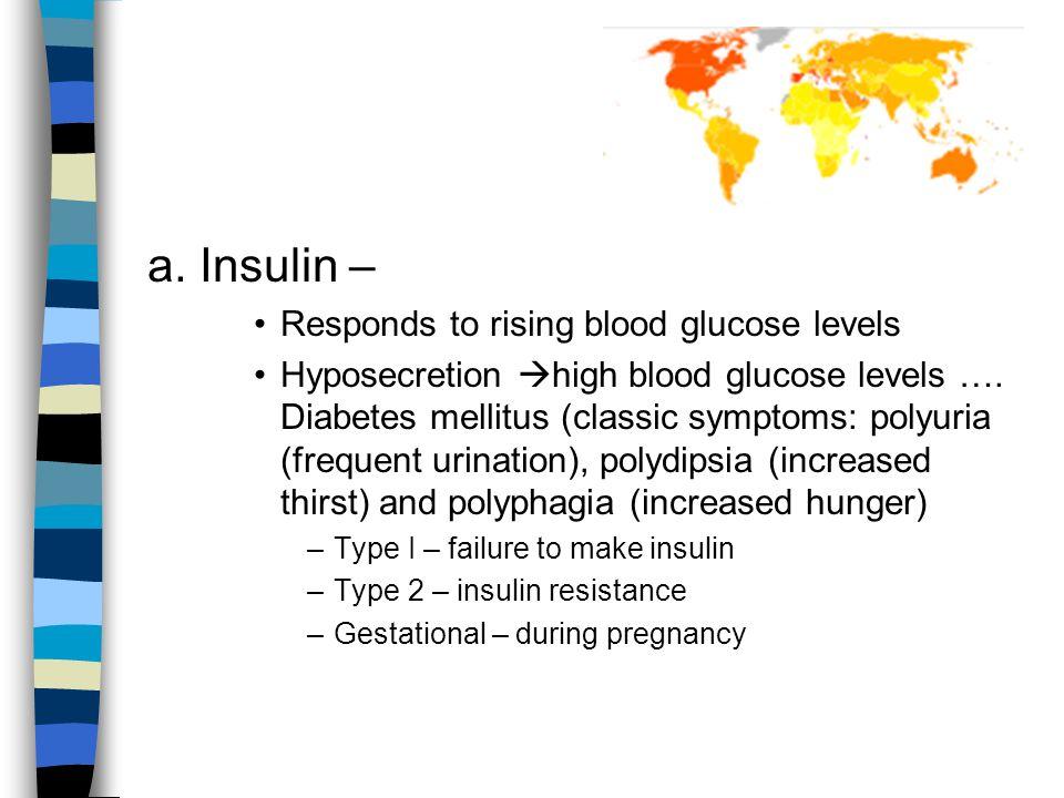 a. Insulin – Responds to rising blood glucose levels