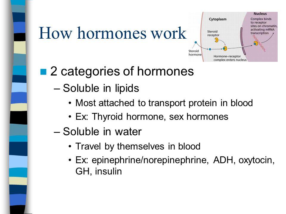 How hormones work 2 categories of hormones Soluble in lipids