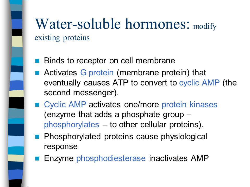 Water-soluble hormones: modify existing proteins
