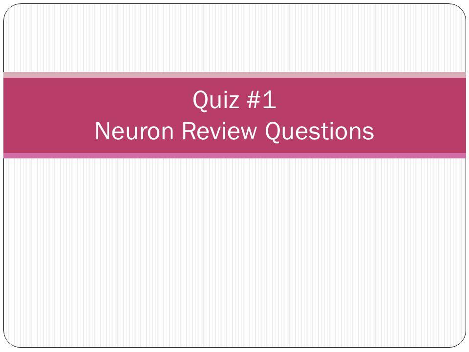 Quiz #1 Neuron Review Questions