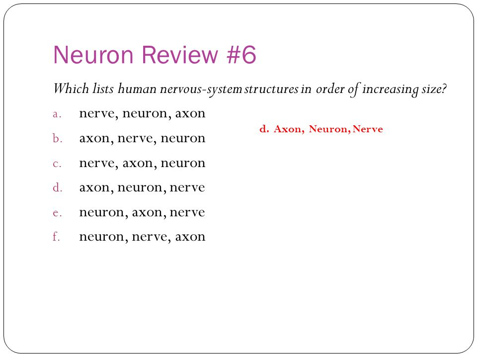 Neuron Review #6 Which lists human nervous-system structures in order of increasing size nerve, neuron, axon.