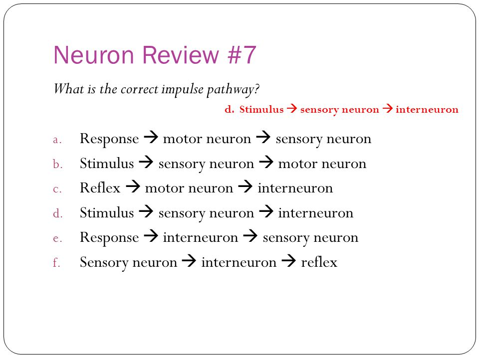 Neuron Review #7 What is the correct impulse pathway