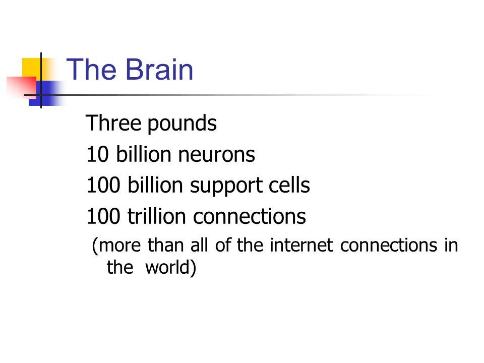 The Brain Three pounds 10 billion neurons 100 billion support cells