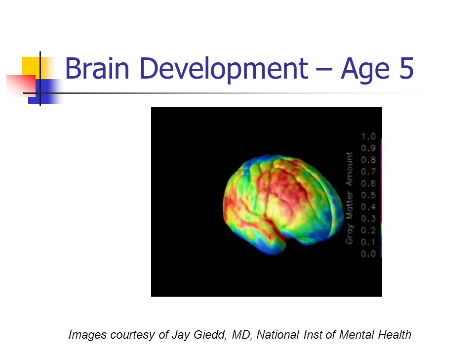 Brain Development – Age 5