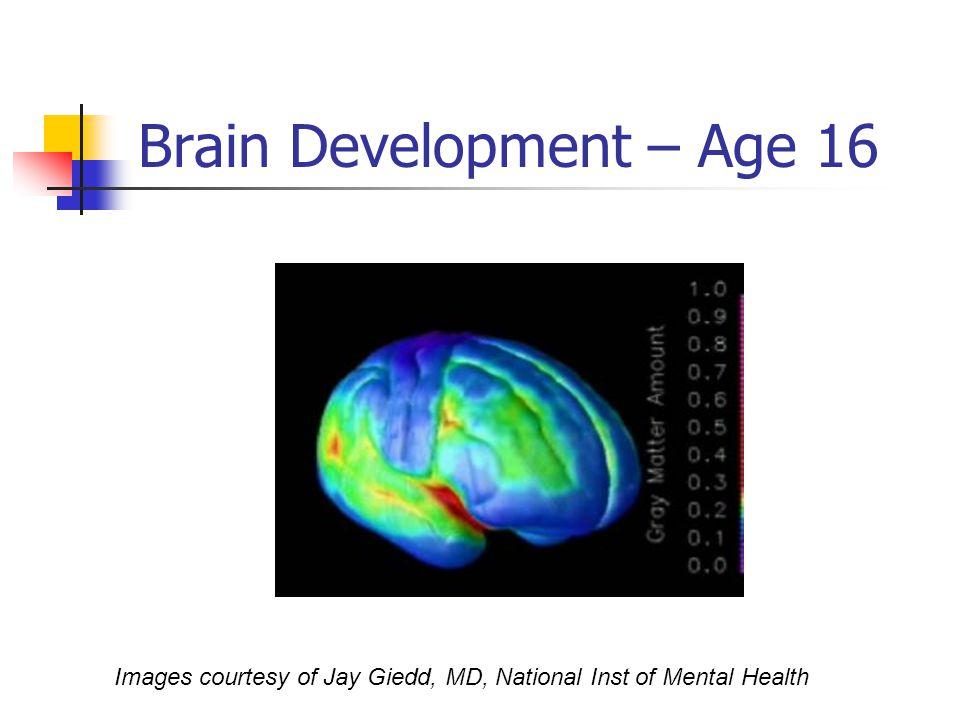 Brain Development – Age 16
