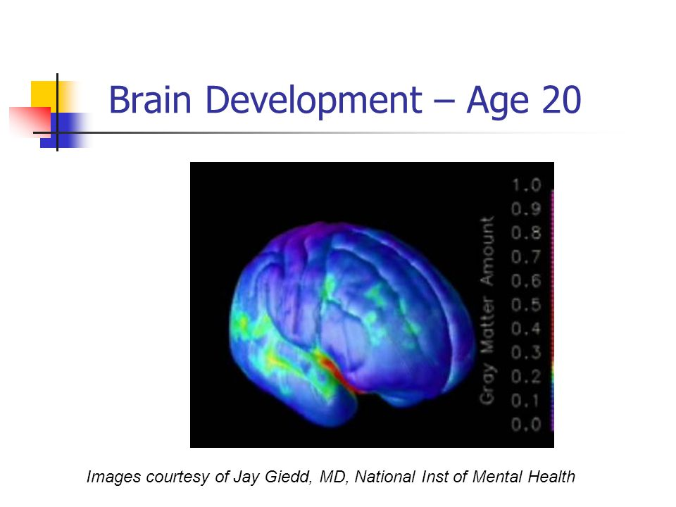 Brain Development – Age 20