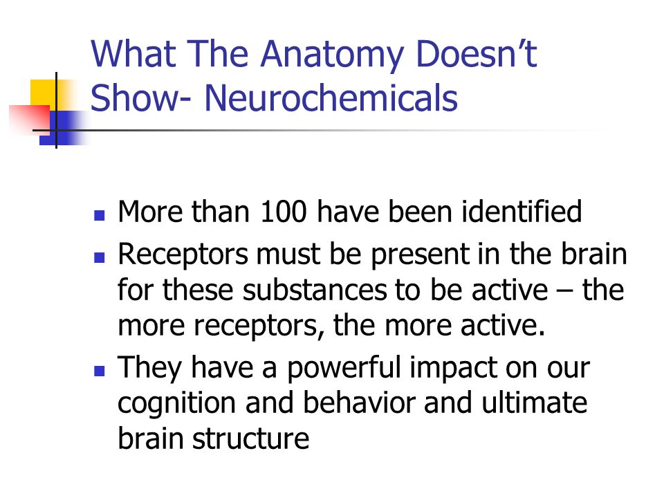 What The Anatomy Doesn't Show- Neurochemicals
