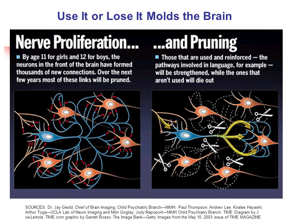 Use It or Lose It Molds the Brain